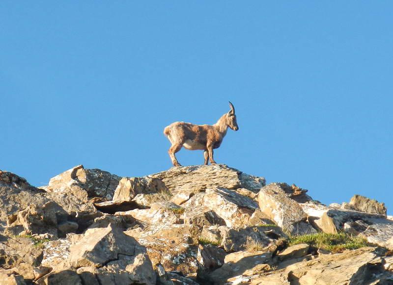 La nature dans la réserve naturelle du Muveran